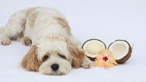 Clean your dogs teeth naturally with coconut oil
