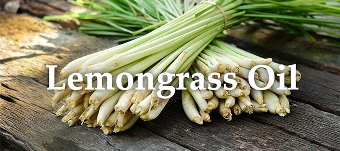 Essential Oil Headers Lemongrass Oil