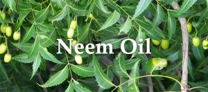 Essential Oil Headers Neem Oil
