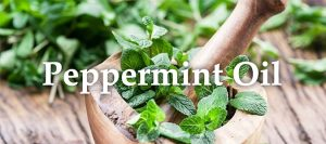 Essential Oil Headers Peppermint oil