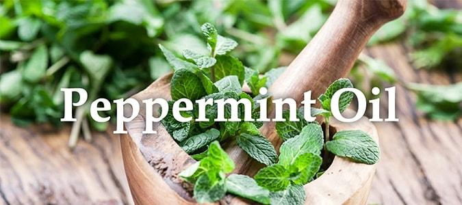 Essential Oil Headers Peppermint oil
