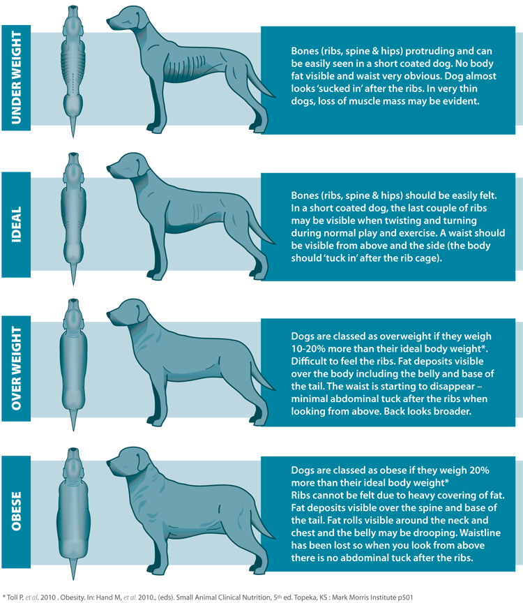 How Much Should You Feed Your Dog Care4dogs