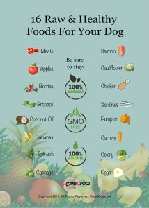 16 Raw and Healthy Foods for your dog