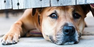 6 Ways To Overcome Separation Anxiety in Dogs