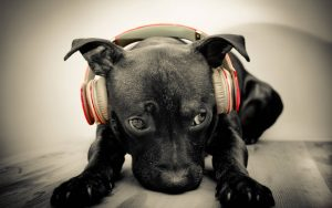 Music for dogs with seperation anxiety