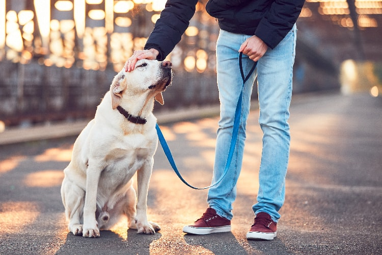 Walk Your Dog to overcome seperation anxiety