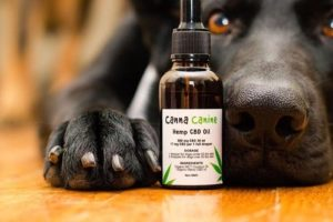 5 Amazing Benefits CBD Oil Can Do For Your Dog