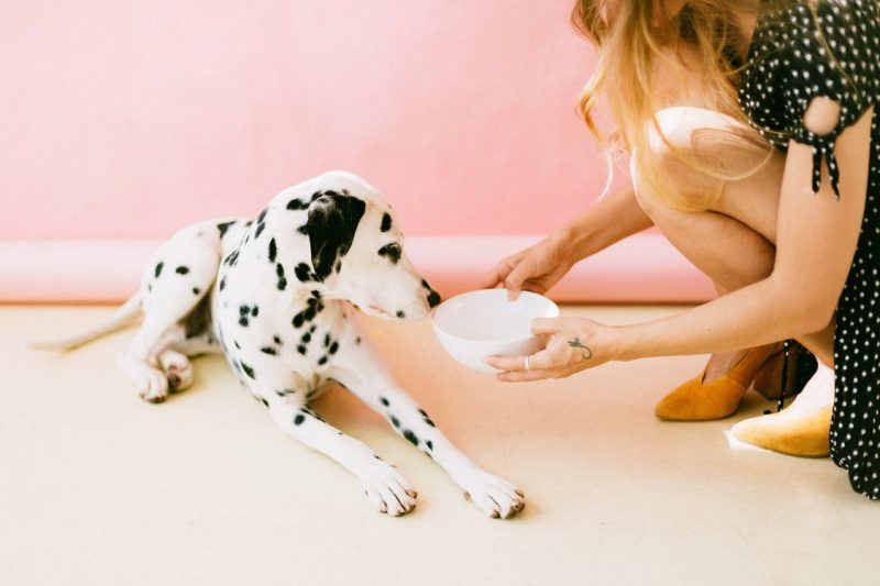 Dogs and Allergies: Does Grain-Free Dog Food Help with Skin Allergies?