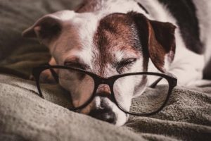 How to Stay On Budget When Caring for an Aging Pet