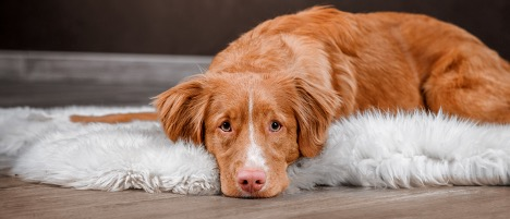How to Prevent Constipation in a Healthy Dog